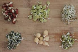 Sprouts for anit-aging